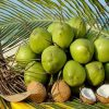 Mơ thấy quả dừa là điềm báo gì?