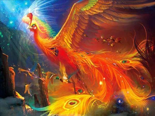 Giải mã giấc mơ thấy chim phượng hoàng mang đến điềm báo gì