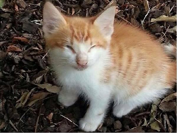 Mơ thấy mèo bị mù là điềm báo gì, đánh con gì dễ trúng?